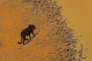ADD-Benny-Rebel-Fotoreise-Suedafrika-Gepard