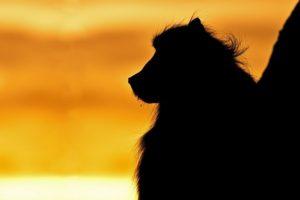 ADL-Benny-Rebel-Fotoreise-Suedafrika-Pavian