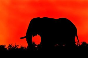 ADN-Benny-Rebel-Fotoreise-Kenia-Elefant