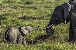 ADO-Benny-Rebel-Fotoreise-Kenia-Elefant