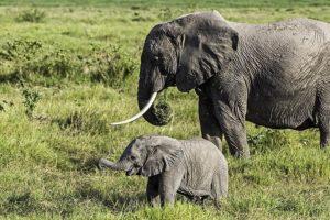 ADP-Benny-Rebel-Fotoreise-Kenia-Elefant
