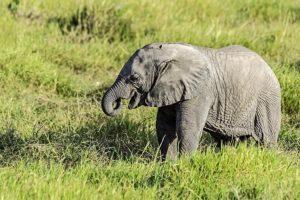 ADQ-Benny-Rebel-Fotoreise-Kenia-Elefant