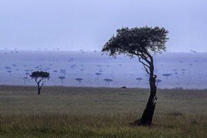 ADX-Benny-Rebel-Fotoreise-Maasai-Mara-Kenia