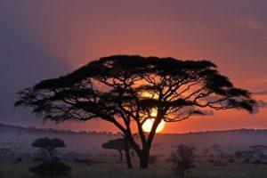 AFC-Benny-Rebel-Fotoreise-Serengeti-Tansania-189
