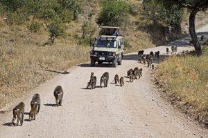 AFJ-Benny-Rebel-Fotoreise-Tansania-Tarangire-Tourismus