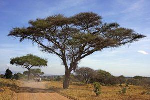 AFP-Benny-Rebel-Fotoreise-Tansania-Tarangire-Tourismus
