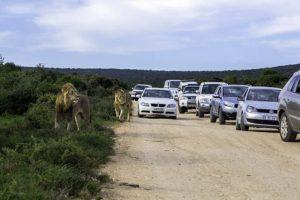 AFZ-Benny-Rebel-Fotoreise-Suedafrika-Tourismus