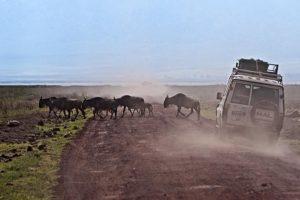 AGA-Benny-Rebel-Fotoreise-Tansania-Tourismus