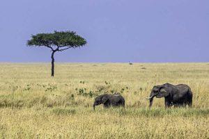 AGT-Benny-Rebel-Fotoreise-Kenia-Elefant