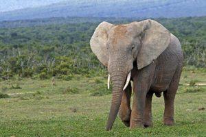 AGV-Benny-Rebel-Fotoreise-Suedafrika-Elefant