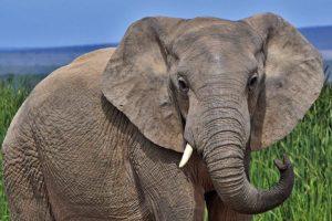 AGX-Benny-Rebel-Fotoreise-Suedafrika-Elefant