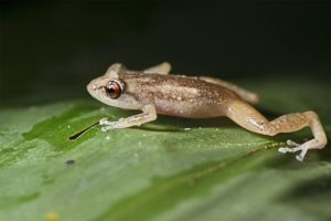 AIj-Benny-Rebel-Fotoreise-Frosch-Costa-Rica