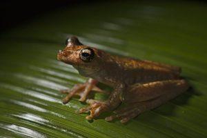 AIm-Benny-Rebel-Fotoreise-Frosch-Costa-Rica