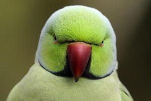 AIn-Benny-Rebel-Fotoworkshop-Vogelfotografie