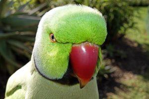 AIq-Benny-Rebel-Fotoworkshop-Vogelfotografie
