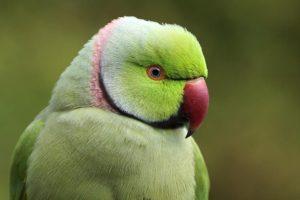 AIr-Benny-Rebel-Fotoworkshop-Vogelfotografie