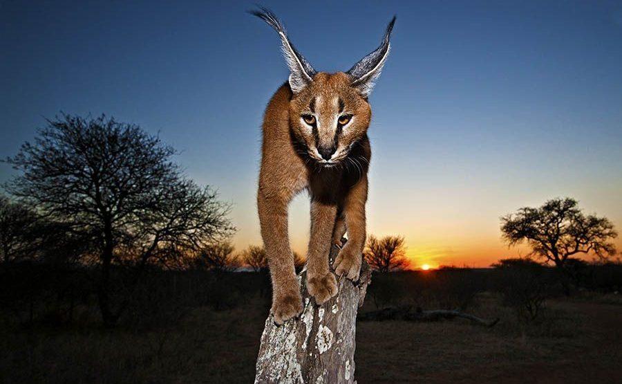 AJBenny-Rebel-Fotoreise-Suedafrika