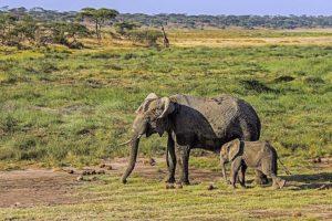 AJh-Benny-Rebel-Fotoreise-Tansania-Elefant