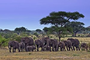 AJn-Benny-Rebel-Fotoreise-Tansania-Elefant