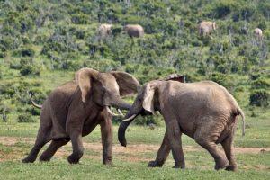 AJt-Benny-Rebel-Fotoreise-Suedafrika-Elefant