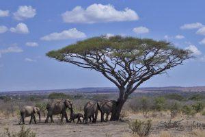 AJy-Benny-Rebel-Fotoreise-Tansania-Elefant
