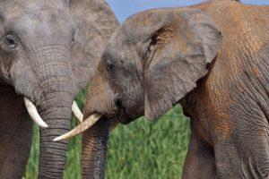 AJz-Benny-Rebel-Fotoreise-Suedafrika-Elefant