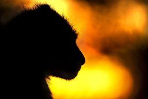 ALc-Benny-Rebel-Fotoreise-Suedafrika-Gepard