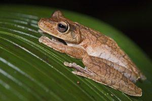 ALw-Benny-Rebel-Fotoreise-Frosch-Costa-Rica