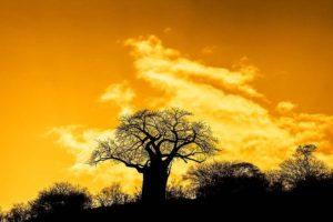 AMf-Benny-Rebel-Fotoreise-Tansania