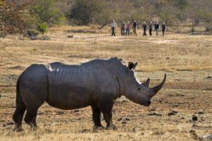 ANd-Benny-Rebel-Fotoreise-Suedafrika-Walking-Safari