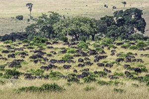 AOi-Benny-Rebel-Fotoreise-Kenia-Migration