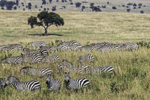 AOk-Benny-Rebel-Fotoreise-Kenia-Migration