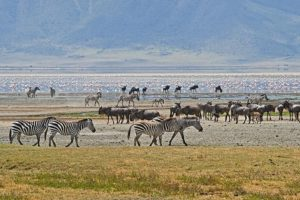 AOn-Benny-Rebel-Fotoreise-Tansania-Ngorongoro