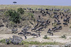 AOp-Benny-Rebel-Fotoreise-Kenia-Migration