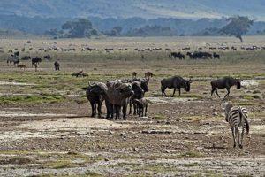 AOs-Benny-Rebel-Fotoreise-Tansania-Ngorongoro