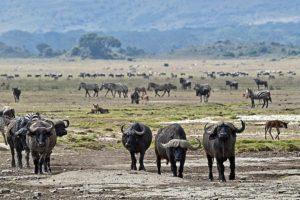 AOt-Benny-Rebel-Fotoreise-Tansania-Ngorongoro