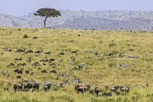 APb-Benny-Rebel-Fotoreise-Kenia-Migration