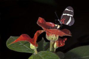 APe-Benny-Rebel-Fotoworkshop-Schmetterling-Costa-Rica