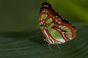 APf-Benny-Rebel-Fotoworkshop-Schmetterling-Costa-Rica