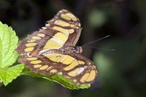 APg-Benny-Rebel-Fotoworkshop-Schmetterling-Costa-Rica