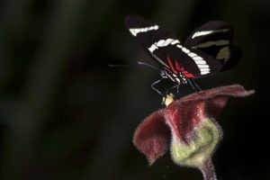 APi-Benny-Rebel-Fotoworkshop-Schmetterling-Costa-Rica