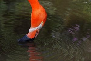 APm-Benny-Rebel-Fotoworkshop-Flamingo