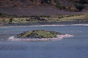 APr-Benny-Rebel-Fotoreise-Tansania-Flamingo