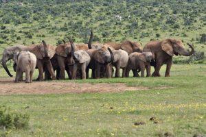 APw-Benny-Rebel-Fotoreise-Suedafrika-Elefant