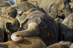 AQa-Benny-Rebel-Fotoreise-ElefantSri-Lanka