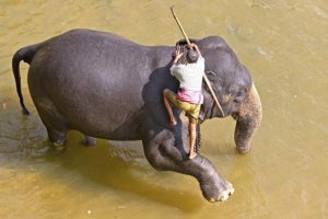 AQc-Benny-Rebel-Fotoreise-ElefantSri-Lanka