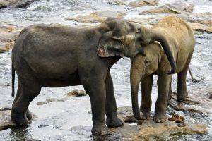 AQe-Benny-Rebel-Fotoreise-ElefantSri-Lanka
