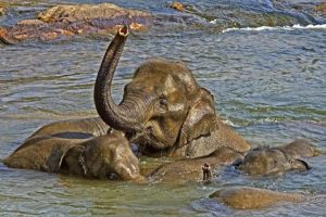 AQg-Benny-Rebel-Fotoreise-ElefantSri-Lanka