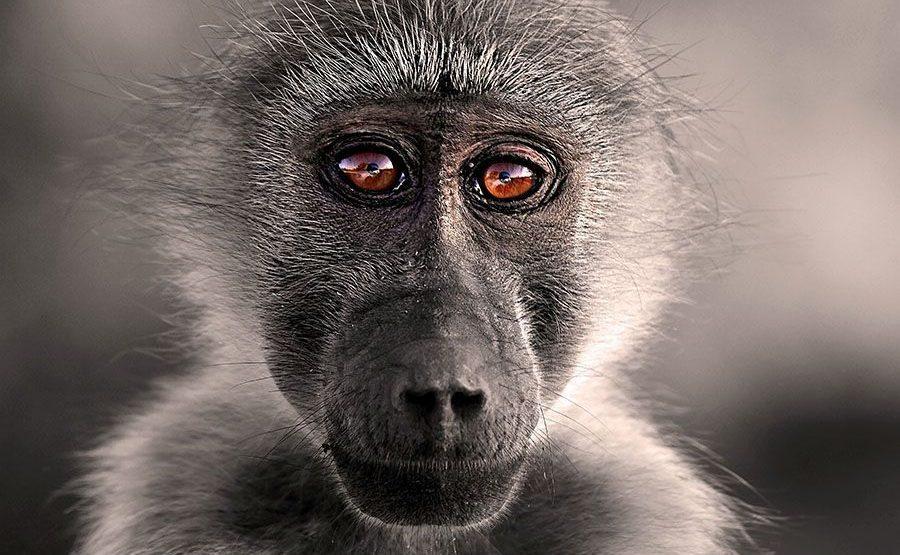 ARBenny-Rebel-Fotosafari-Suedafrika