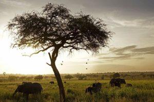 ATaBenny-Rebel-Fotoreise-Tansania